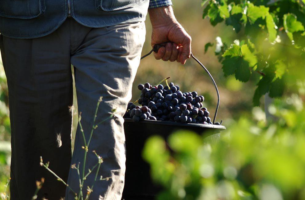 agricole-viticole